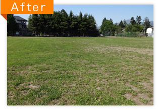 草刈り作業(AFTER)
