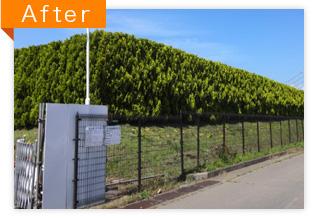 工場周辺の植栽剪定作業(AFTER)