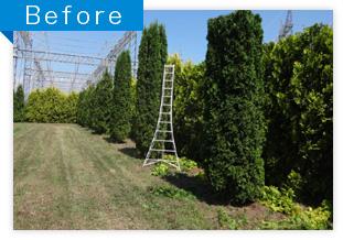 工場周辺の植栽剪定作業(BEFORE)